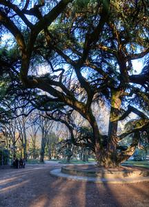 Old Tree - Parco del Popolo, Reggio Emilia, Italy - December 17, 2011