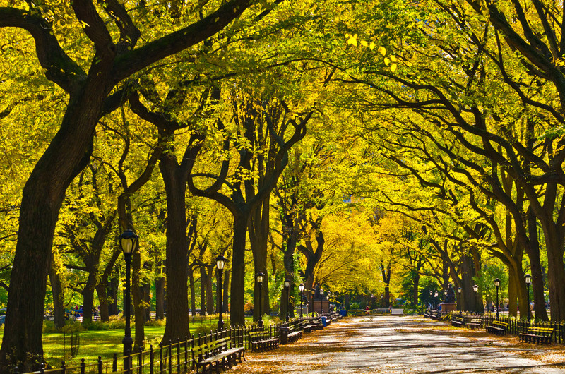 a wide avenue in Central Park