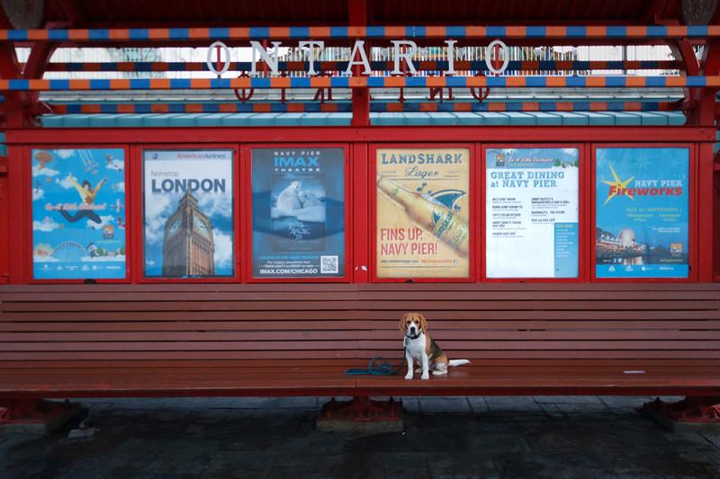 Brody Visits Navy Pier