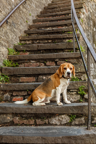 5+ year old dog resting on 170+ year old steps.