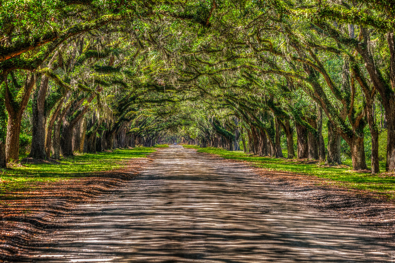 Wormsloe Plantation-