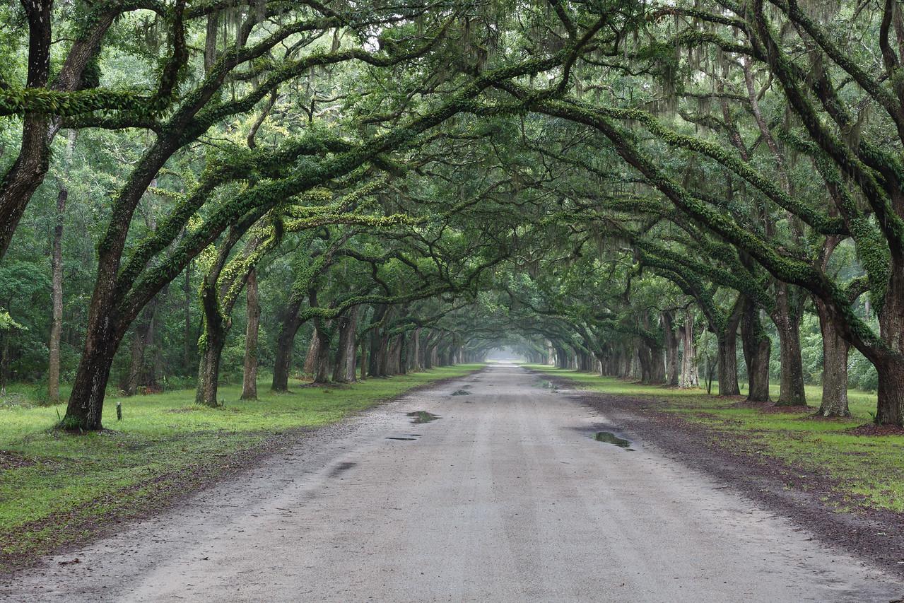 Wormsloe Plantation Historic Site-6949