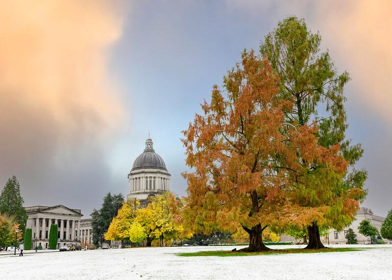 Fall Meets Winter | Washington State Capitol, Olympia, Washington