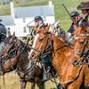 Union Horses