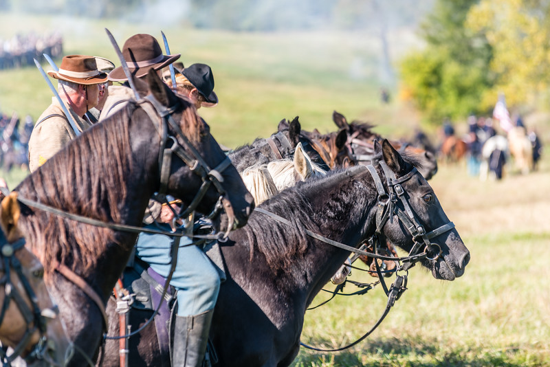 Confederate Horses in Line