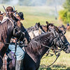 Confederate Horses in Line