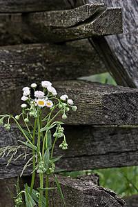 Wildflower at Antietam