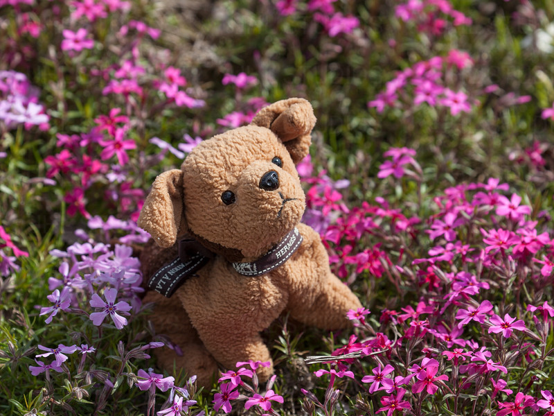 Kai in the Flowers