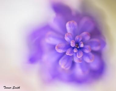 Melting Purple
