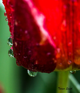 Droplet Reflections