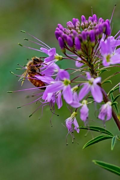 Purple Flower Bee