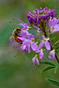 Purple Flower Bee