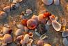 Beach Shells 2