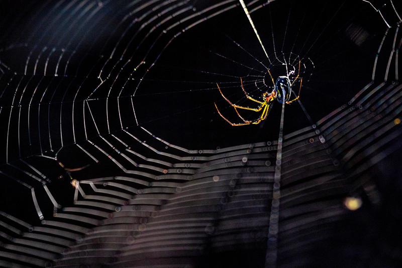 Swamp Spider 1