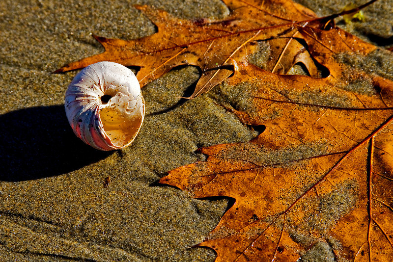 Leaf & Shell 2