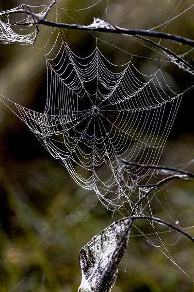 Swamp Web 2