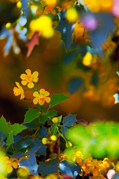 Flower Menagerie