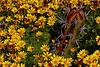 Cactus & Sunflowers