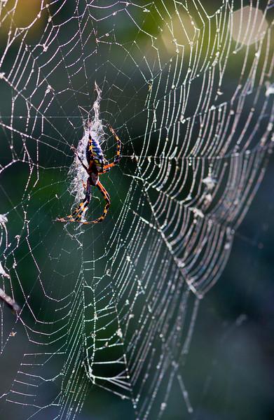 Corkscrew Spider 2