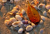 Beach Shells 1