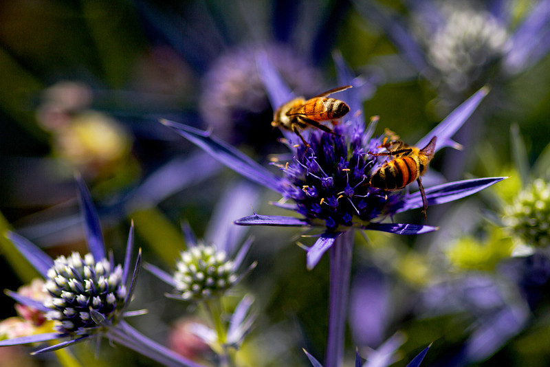 Spikey Bees