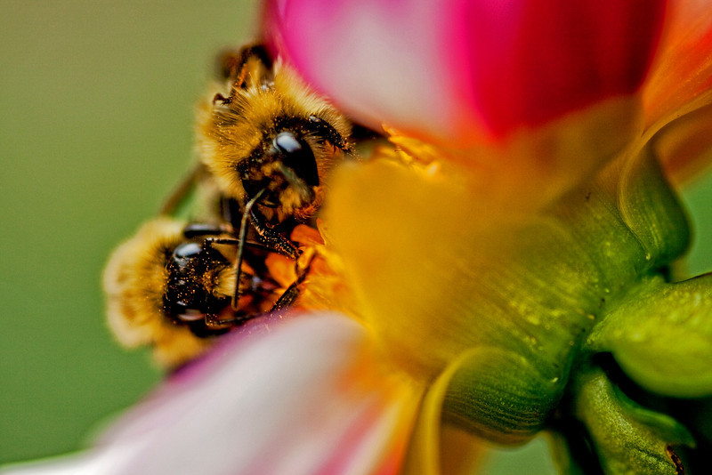 Bee Banquet