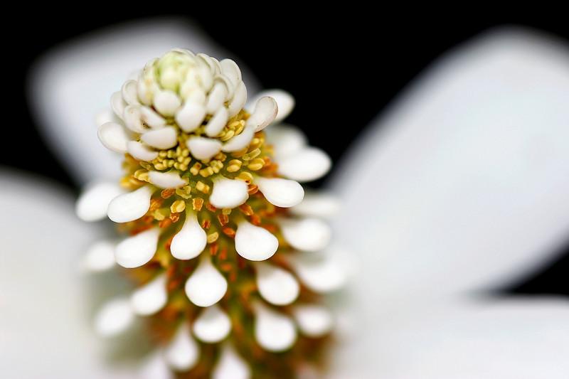 White Flower Soft