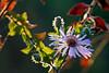 Dewdrop Flower 4-1