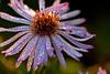 Dewdrop Flower 5