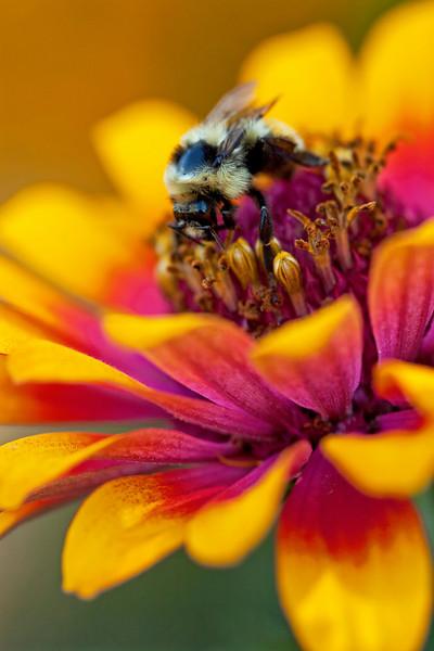 Bee Flower Surfing