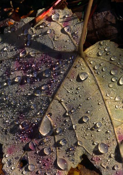 Dewdrop Leaf