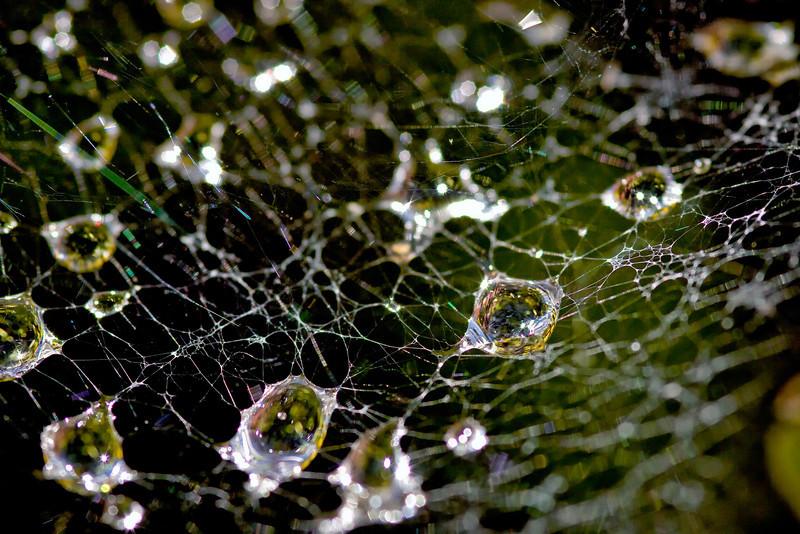 Dewdrop Web 2