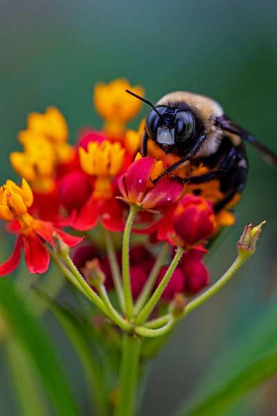 Bumble Bee Lunch 2