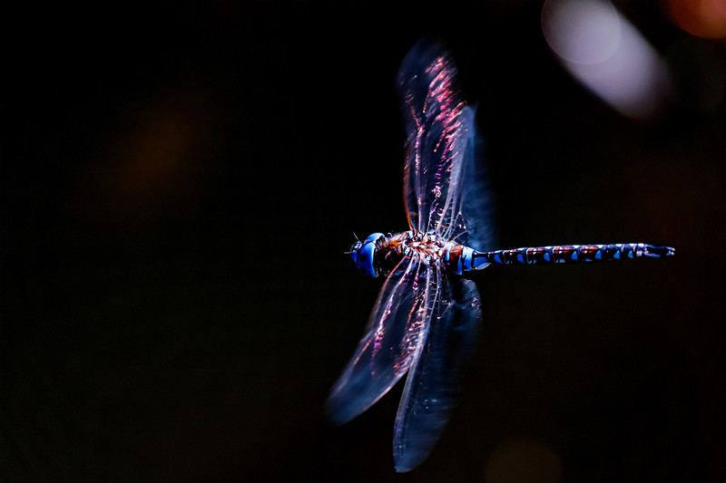 Dragonfly Hover