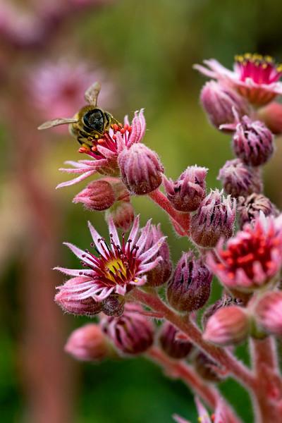 Pre-historic Bee