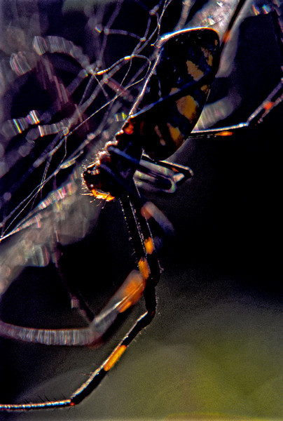 Spyder on Web (2)