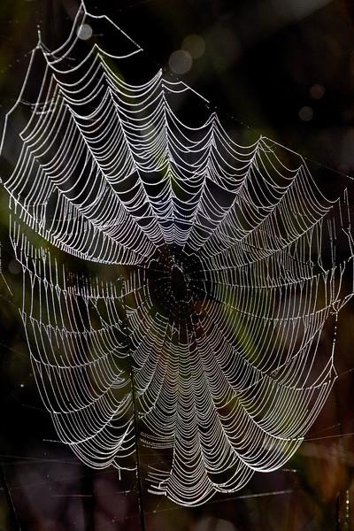 Swamp Web 1