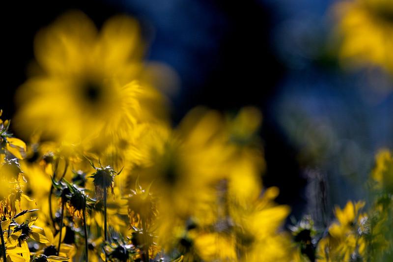 CB Wildflowers 4