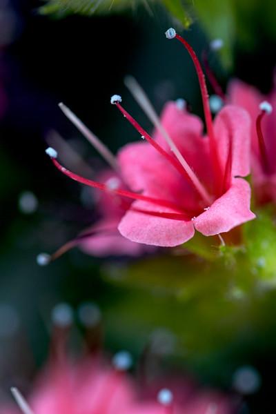 Smooth Pink 2