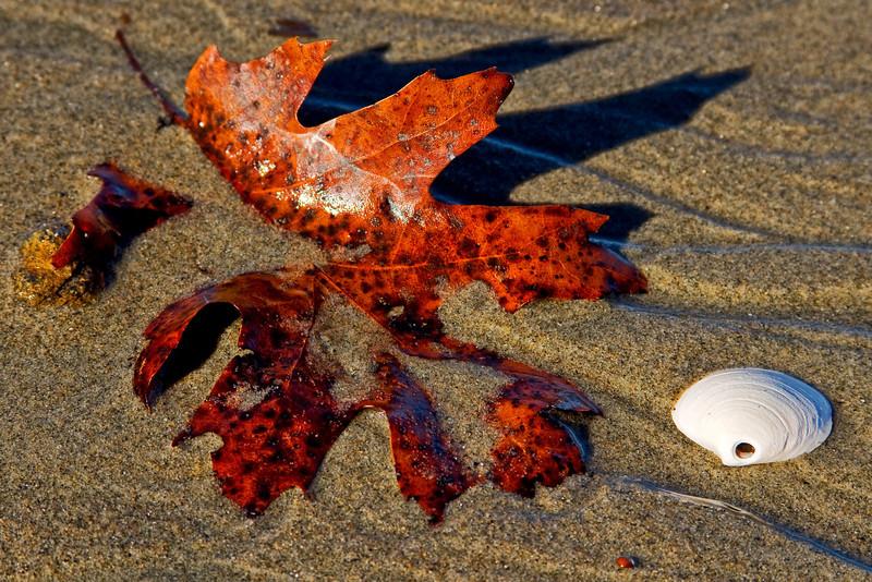 Leaf & Shell 1