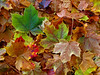 Ground Leaves 2