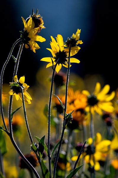 CB Wildflowers 2