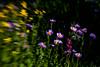 Wildflower Dark Blur