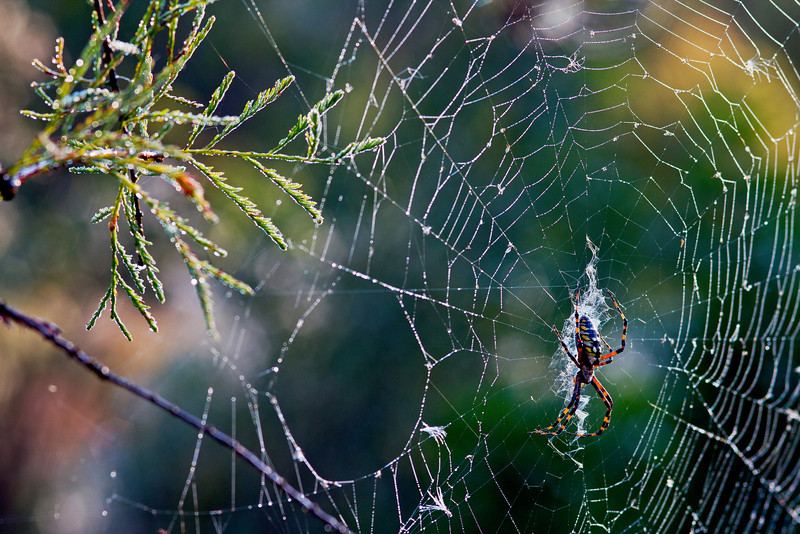 Corkscrew Spider 1