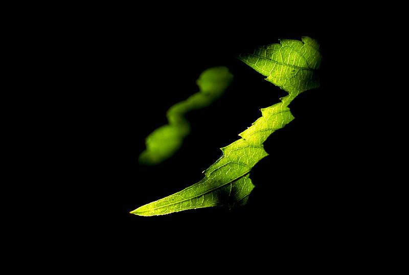 Shadow Leaf 2