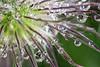 Dewdrop Garden 3
