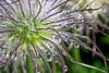Dewdrop Garden 2