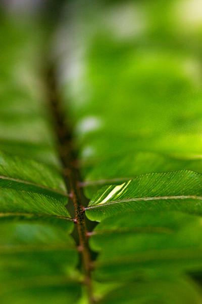 Leaf Streach