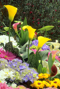Calla Lilies, Hydrangea & Mums