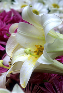 Lilies & Mums